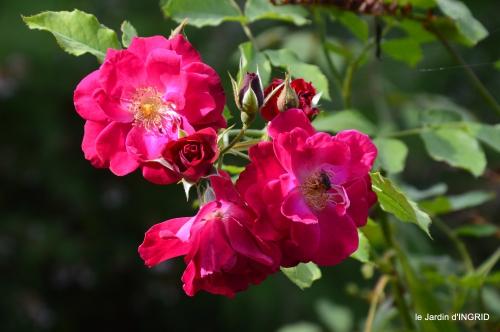 bouquet,jardin de Monet,les vaches,Pourville sur mer 076.JPG