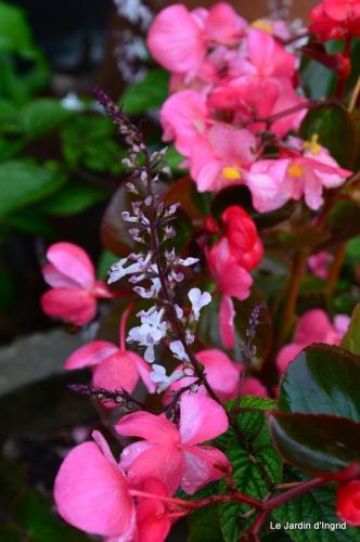 jardin serre bucher automne 004.JPG
