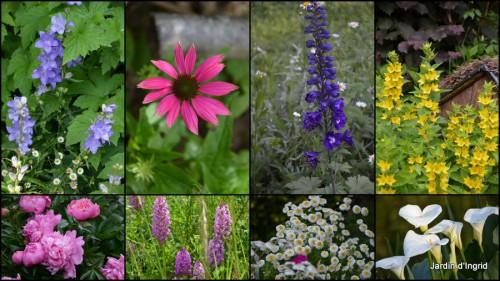 2013-06-23 jardin,potager,roses,sauges4.jpg