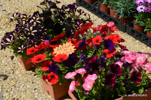 Cadouin,ancolies,roses,pollen,osier,photos Fabien,coquelicots 030.JPG