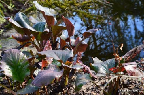 oiseaux,travaux,arbustes,les dernières fleurs 088.JPG