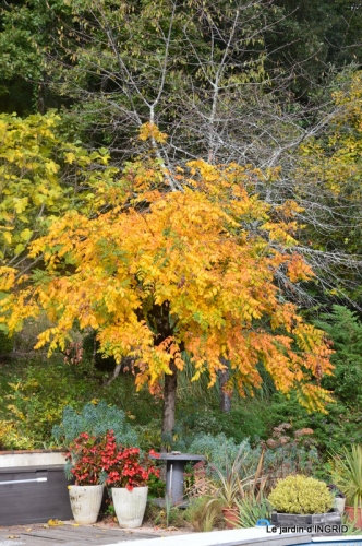canal automne ,jardin,Ines 073.JPG