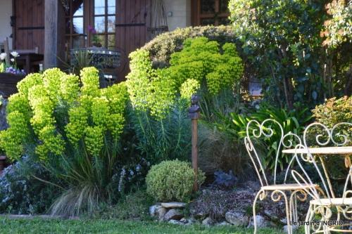 jardin confiné ,osier,magnolia jaune 169.JPG