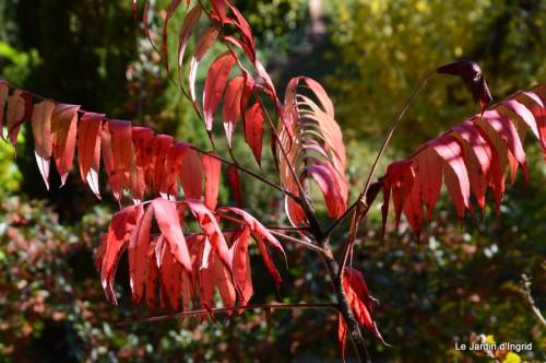 jardin octobre 079.JPG