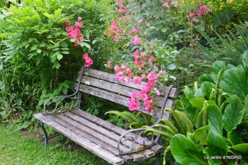 mon jardin,dégats buis, 108.JPG