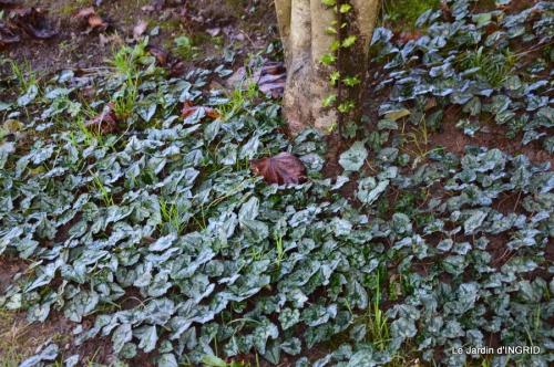 Grues et plantes à Ciron 053.JPG