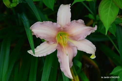jardin,chez Bernadette,puces,cygnes,pluie 136.JPG