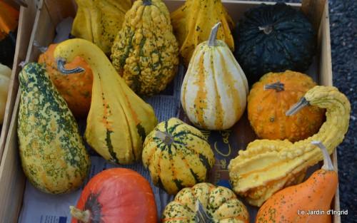 champignons,citrouilles,st Mayme de Péreyrol,fuschias,jardin aut 061.JPG