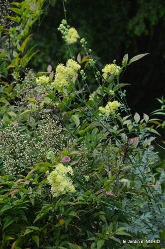 jardin,chez Bernadette,puces,cygnes,pluie 122.JPG