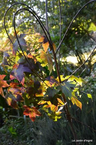 jardin début d'automne ,Sophie,rouge 014.JPG