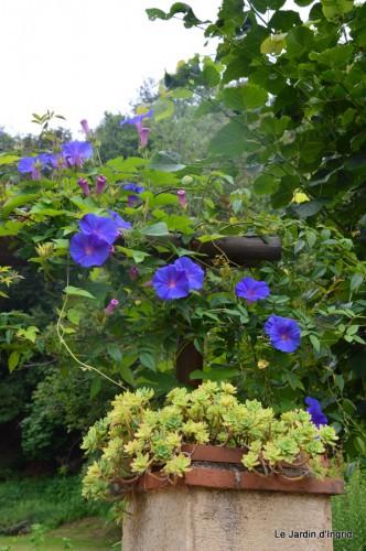 jardin,les filles,fleurs Peyrichou 003.JPG