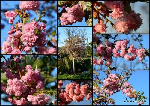 2015-04-13 Bergerac, jardin ,arbres fruitiers,printemps.JPG