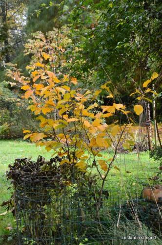 automne,arbres,inondation 003.JPG