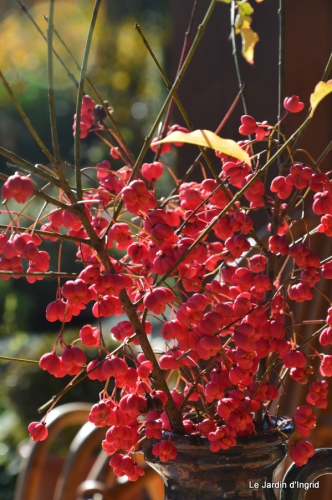 jardin automne ,petits roses 074.JPG