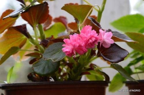 jardin (3 semaine de mars) 049.JPG