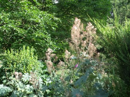 été,dahlia,lantana,bouillon blanc,platycodon