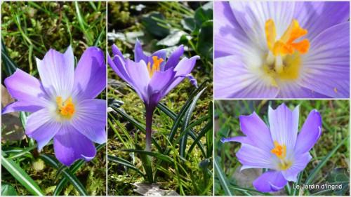 2014-02-17 prunus,anniversaure Romane,taille haie.jpg
