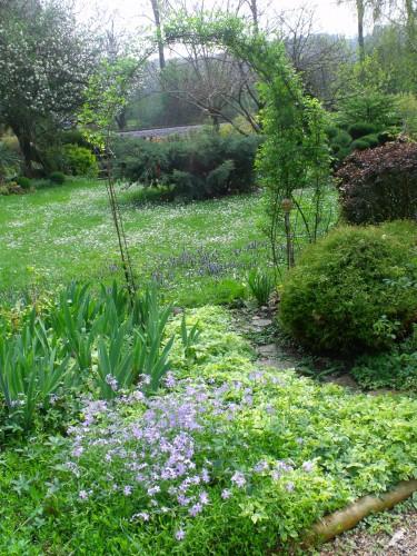 jacinthes sauvages,adjuga,phlox divaricata,pensée,muscari,iris