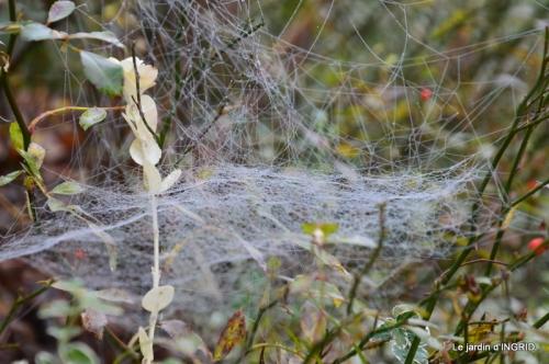 Brouillard,cypres chauve,jardinage 021.JPG
