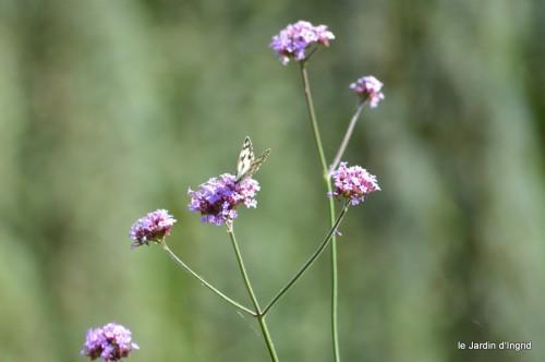 coeur des fleurs,papillons,libellules 168.JPG