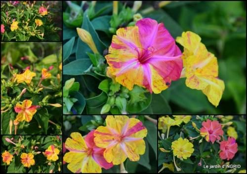 2015-07-23 jardin ,bord de la Dordogne,cygnes.jpg