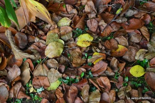 Romefort,bord de Creuse,vent,feuilles,jardin,canal 167.JPG