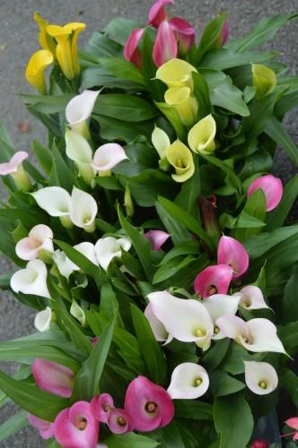 chateau  Banes,marché fleurs Lalinde 063.JPG