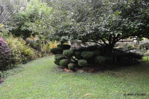Tuillières,stenbergias,Jaune,jardin,chassis 186.JPG