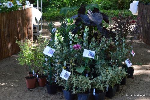 mariage,jardin,la Brande,figues 099.JPG