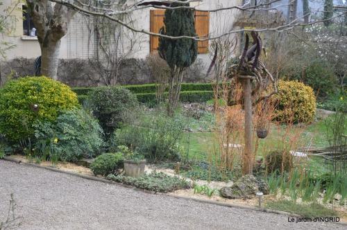 paillage,primevères,jonquilles,jardin 028.JPG