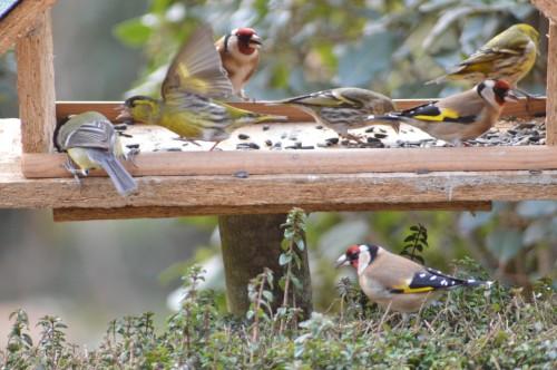 les oiseaux sur terrasse 043.JPG
