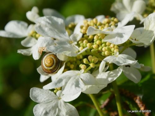 geais,jardin,printemps 056.JPG