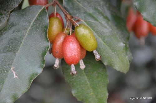 oiseaux cacaouettes gouttes,petits fruits 072.JPG