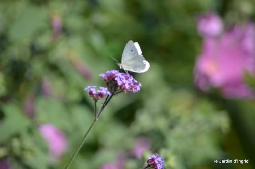 coeur des fleurs,papillons,libellules 157.JPG