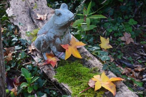 Jardin à l'automne 109.jpg