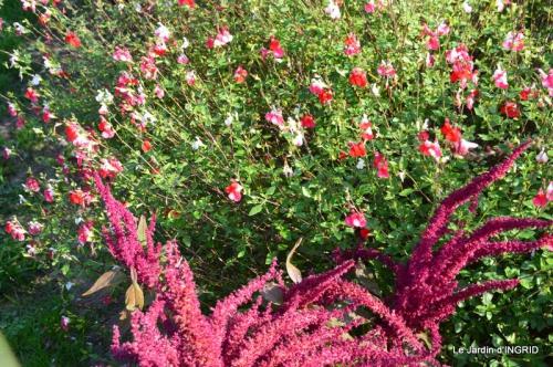 jardin Mme Perichou,grandes fleurs,bouquet,jardin 010.JPG