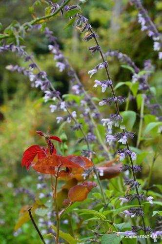 clair de lune,jardin automne,coucher de soleil 006.JPG