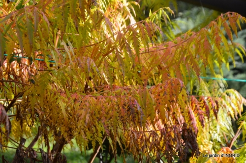 canal automne ,jardin,Ines 002.JPG