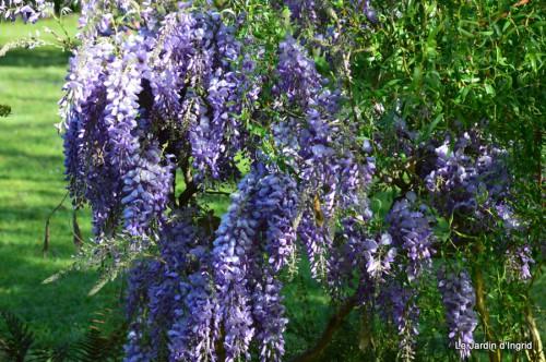 mésanges,escargots,ros. de banks,abeilles,Monpazier,Banes,Forêt 118.JPG