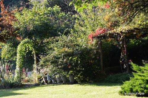 jardin,asters,fleurs blanches,chatte,rosiers roses 066.JPG