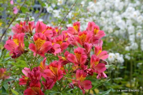 jardin Mme Perichou,grandes fleurs,bouquet,jardin 044.JPG