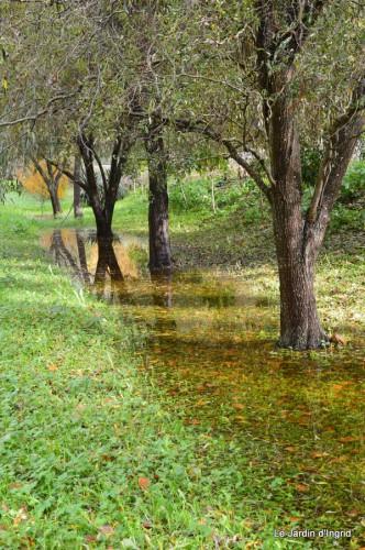 automne,arbres,inondation 118.JPG