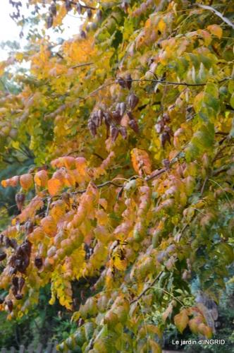 canal automne ,jardin,Ines 028.JPG