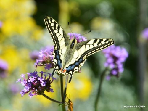 hémérocalles,coulobre,visiteurs,papillons,voitures anciennes 015.JPG