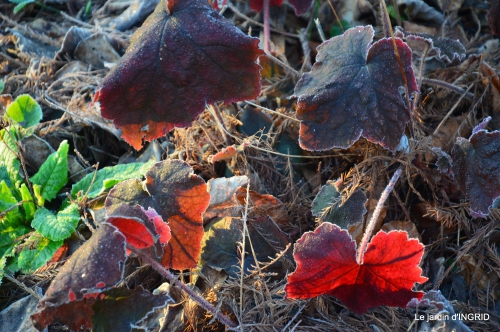 première gelée,compositions florales à garder,jardin 022-001.JPG