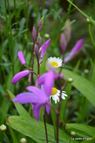 CADOUIN,cascade,iris,roses,fl.sauvages 108.jpg