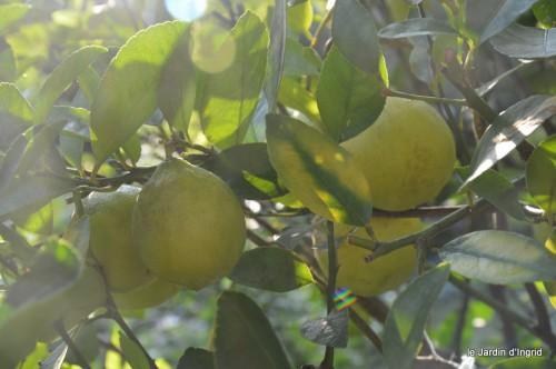 jardin,fruits,Caro,papillons,manthe religieuse,Lalinde 051-001.JPG