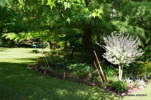 jardin soir et matin 055.JPG