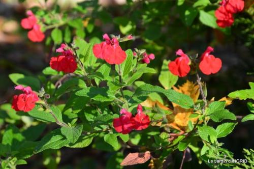 jardin, feuilles,sauges,gloriette,land art 033.JPG