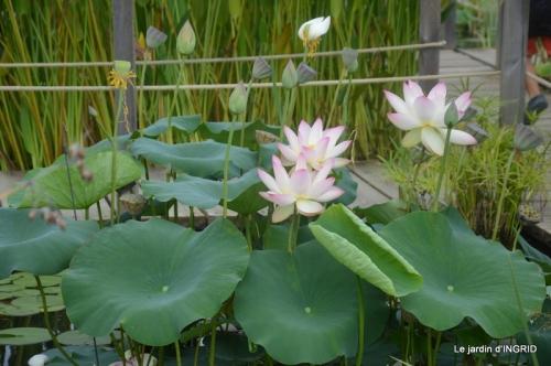 orage,puces,bouquet,Anniv.Ines,Brantome,Jardins d'eau 299.JPG